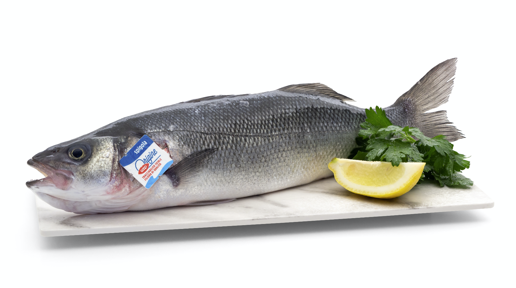 prodotti-ittici-fotografia-cocicom